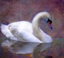 Swan Lake - A Solo Performance by Mark Richards