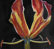 Flame Lily by Pieter Oosthuizen