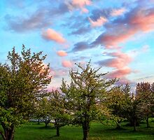 Orchard by rocamiadesign