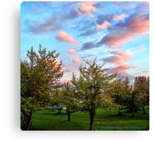 Orchard Canvas Print