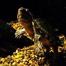 Little turtle by Loretta Marvin