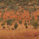Queensland Bush by Dean Bailey