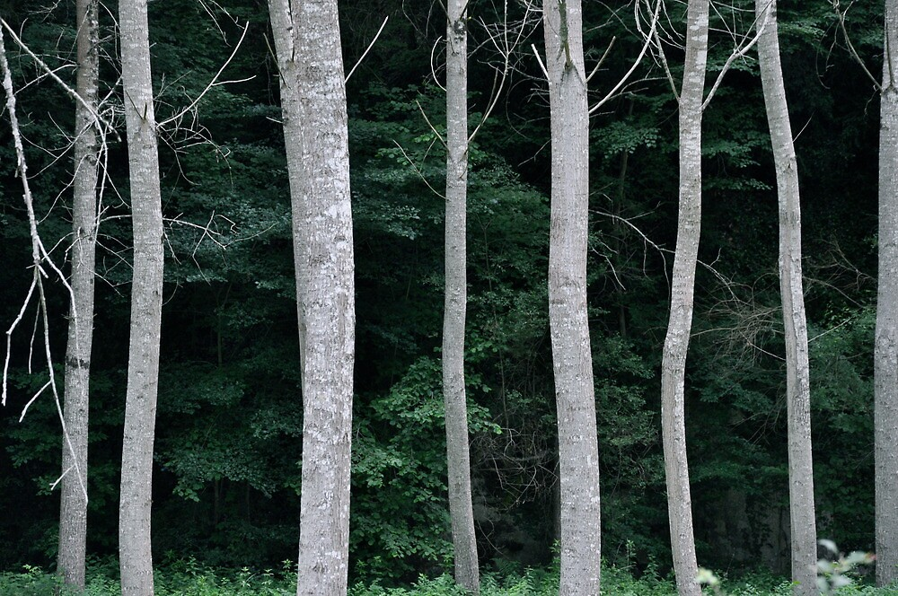 Forest Edge by Dean Bailey