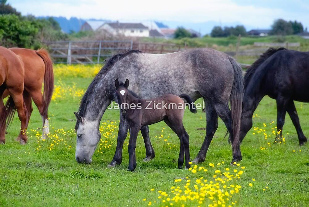 Amorette & Foal by James Zickmantel