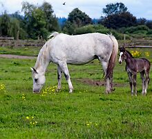 Holly & Foal by James Zickmantel