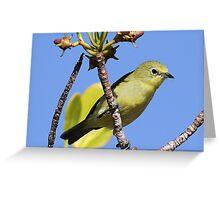 yellow white eye Greeting Card