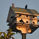 Birds' Home by Eileen Brymer