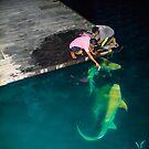 Shark feeding in the Maldives - Black tip reef shark by Atanas Bozhikov NASKO