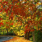 Olinda Autumn by Mark Higgins