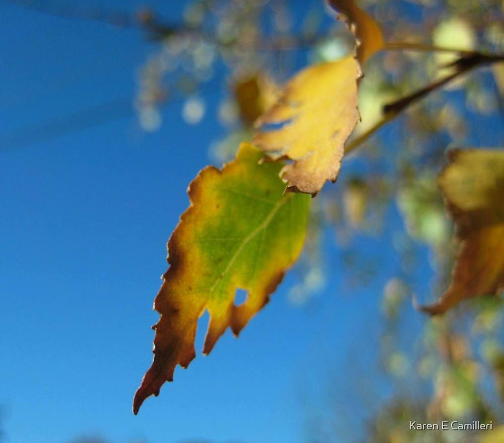 autumn dreams by Karen E Camilleri