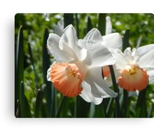 Two-tone Daffodils Canvas Print