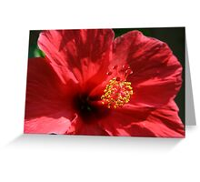 Summer's Red Flower Greeting Card