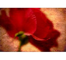 Red Rose in Profile Photographic Print