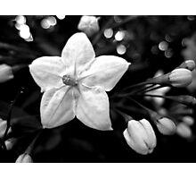 Jasmine Nightshade Photographic Print