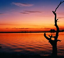 Sunset on Chobe River, Botswana by JenniferEllen