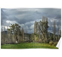 Roadside Trees Poster