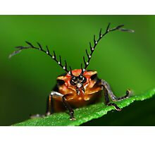 long horned beetle Photographic Print