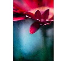 ...nel mio cuore - atto secondo... Photographic Print