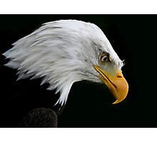 The American Bald Eagle Photographic Print