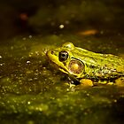 Green Frog In Algae by Michael Cummings