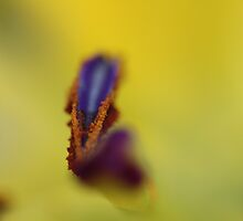 Caution: Lily pollen may stain by Astrid Ewing Photography
