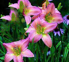 Lilies in Rain by Eileen McVey