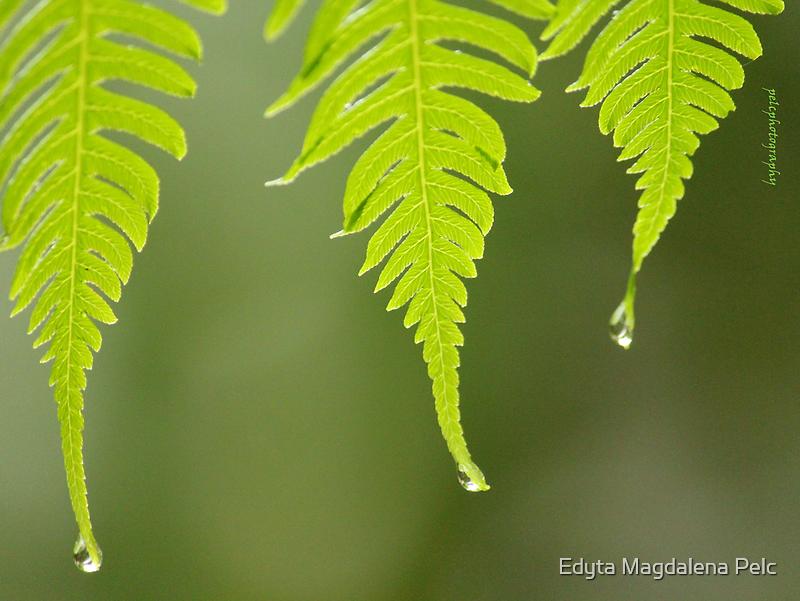 On a rainy day... by Edyta Magdalena Pelc