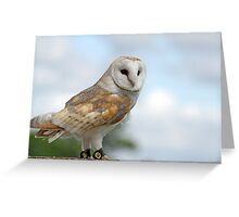 beautiful owl  Greeting Card