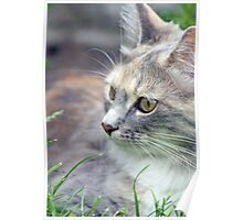 beautiful kitten  Poster