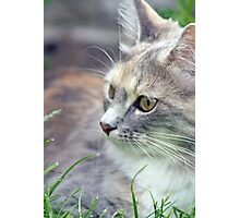 beautiful kitten  Photographic Print