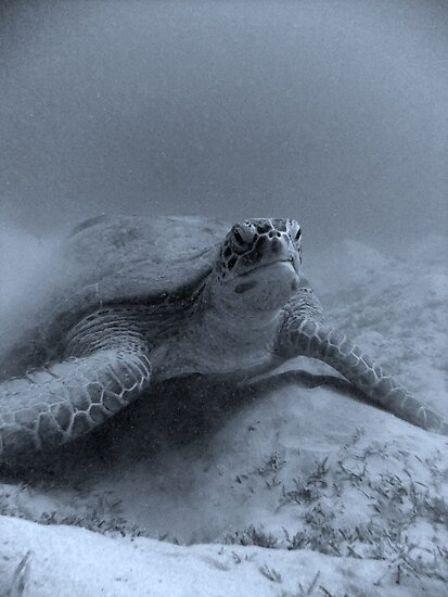 Giant Turtle by Katie  Hollamby