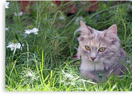 sweet kitten  by liza scott