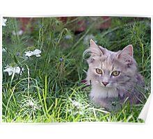 sweet kitten  Poster
