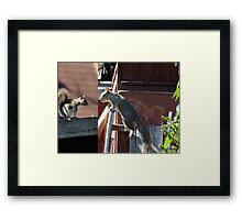 DO YOU HAVE ANY NUT'S  Framed Print