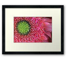 Pink Splendour Framed Print