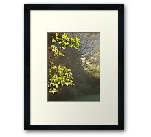 Brightly Shining Framed Print