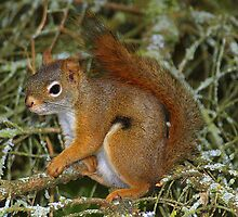 Inquisitive Squirrel by vette