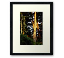 Golden Glow of Afternoon Framed Print