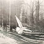 White Bird on path by Diane  Kramer