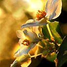Morning Light by Janice Carter