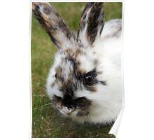 cutie bunny in the garden  dawarf lop  Poster