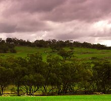 The Rain came and the Earth turned Green by NolsNZ