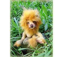 Lazarus Lion - Handmade bears from Teddy Bear Orphans Photographic Print