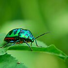 The Green by JYOTIRMOY Portfolio Photographer