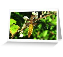 Broad-Bodied Chaser Greeting Card
