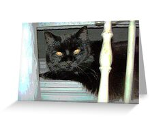 Blackie on the Sill Greeting Card