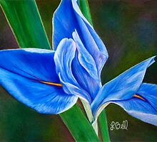 Beautiful Blue Flag Iris Flower - Fleur-de-lis from the Garden by Laura Bell