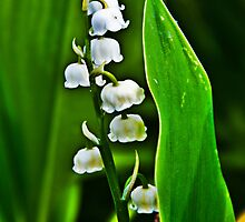 Lily of the Valley by Denise Abé