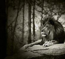 pride  by wanda lechene