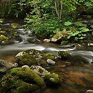 River Tales by Denitsa Dabizheva